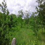 Dudova šuma